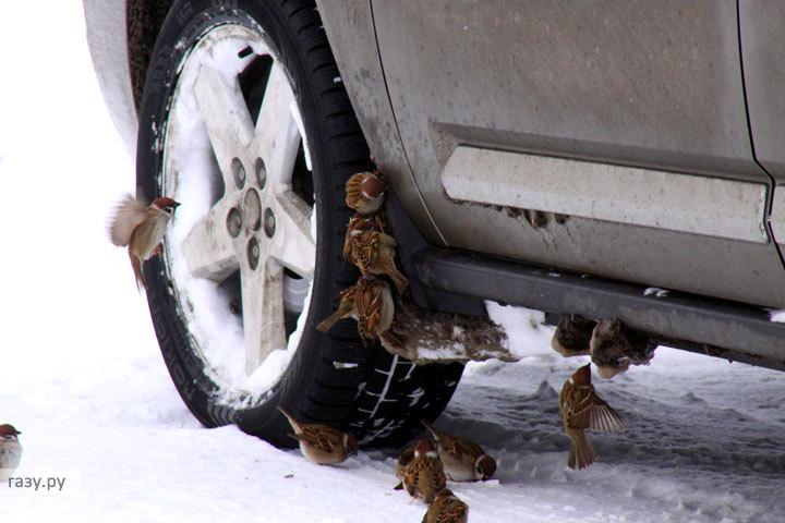 Закрывают ли заправки при чистке снега